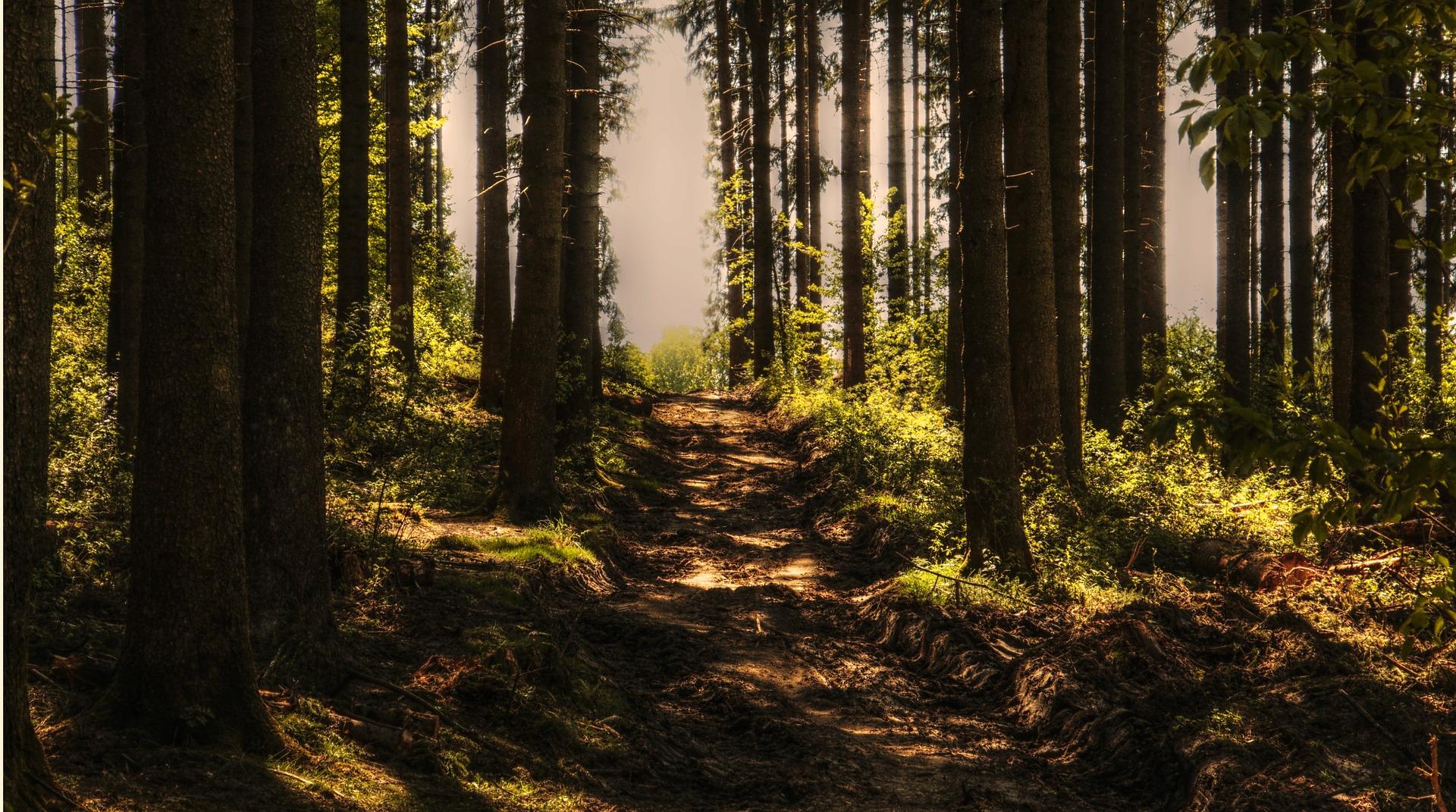"""Abesagt: Ausflug in den Wald in Nord-Wales - """"Tannengrün-Outing"""""""